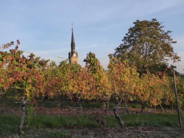 Hattstatt_Alsace_vignoble_eglise