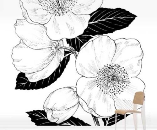 Eucryphia-Nymansensis_Wallpaper_SurfaceView