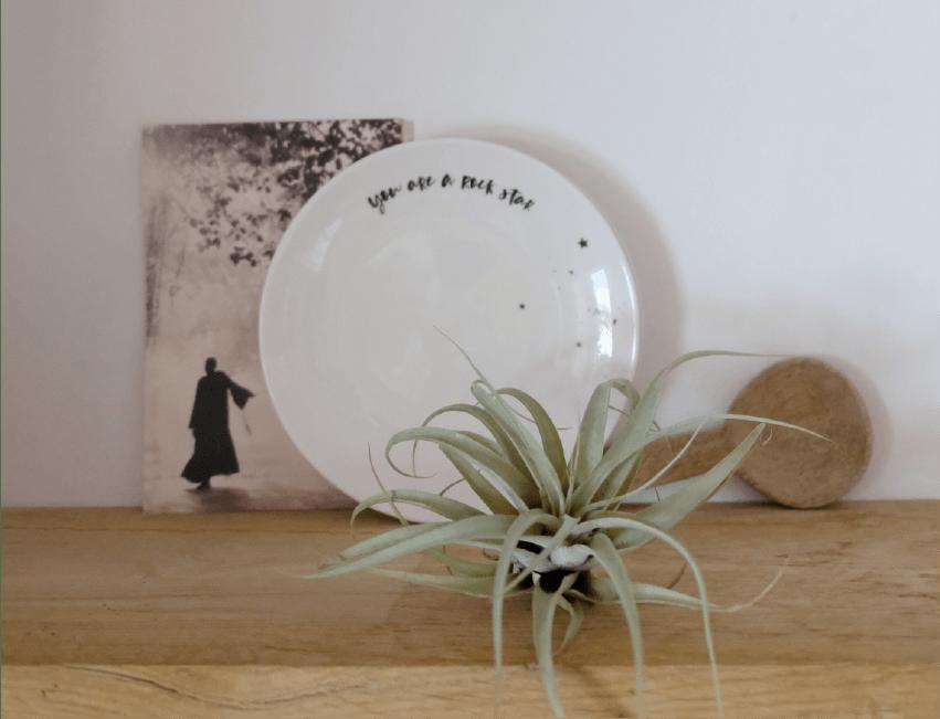 Pourquoi faire cadeau d'une plante à Noël ?
