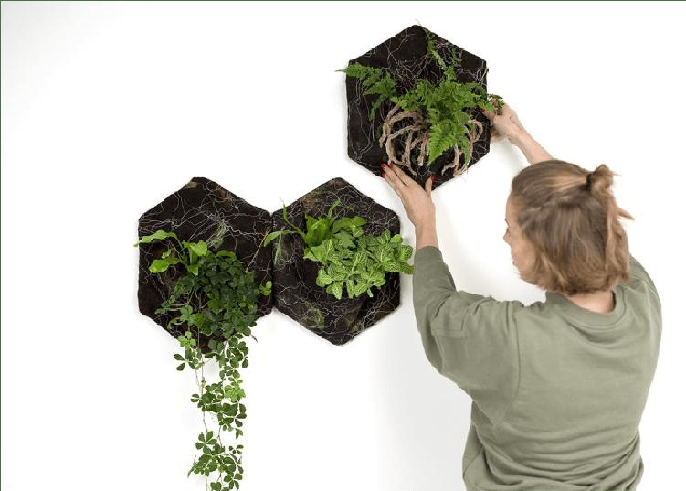 Pourquoi faire cadeau d'une plante à Noël ? Et quelles plantes choisir pour être sûr de ne pas se tromper ? Réponses en images chez Nannette d'Interior Crisp sur www.decocrush.fr - @decocrush