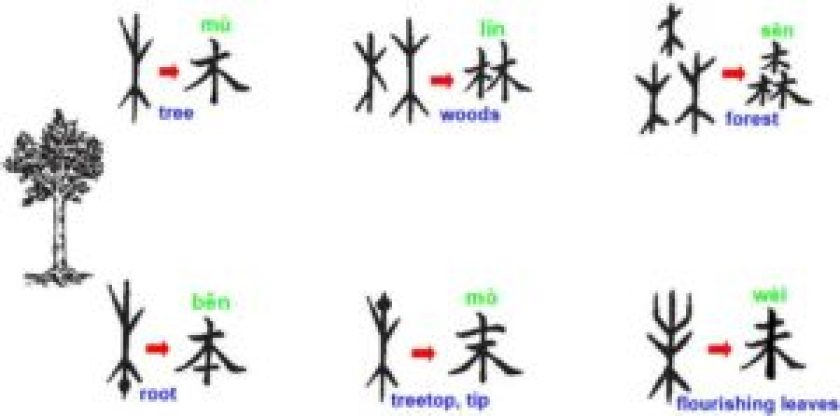 characters derived from tree