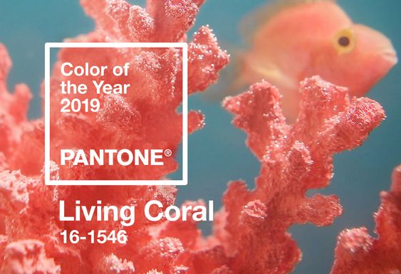 coral2019_decofairy (10)