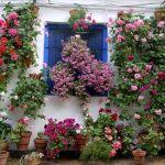macetas en flor en los patios de córdoba