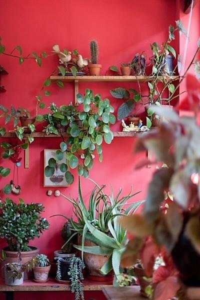 Decoración de interiores ¡atentos a la tendencia Junglalandia...! 11