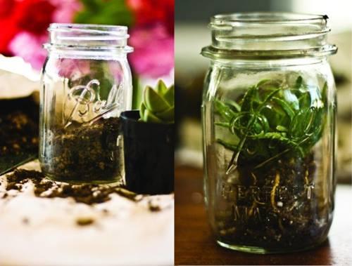 Hacer terrarios de plantas crasas con tarros de cristal 1