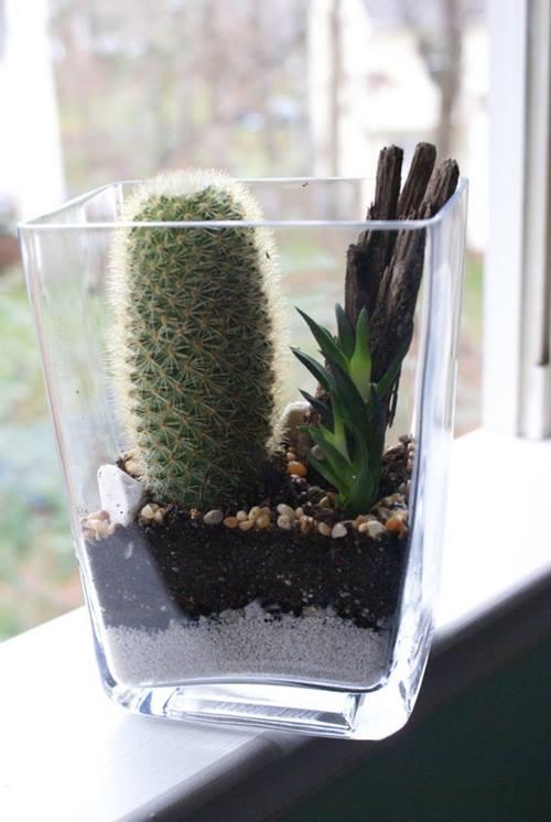 Hacer terrarios de plantas crasas con tarros de cristal 5