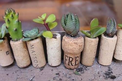 Manualidades para decorar la casa idea con plantas crasas reciclando tapones de corcho 2
