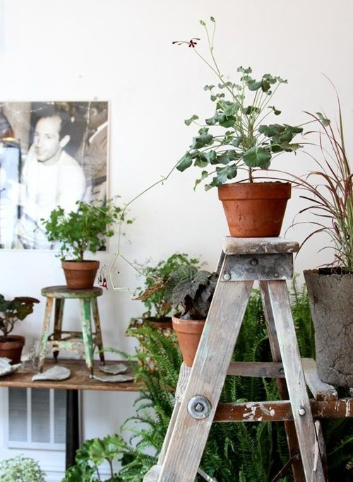 ¡Mi casa, mi selva! 20 ideas para decorar con plantas de interior 14