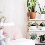 ¡Mi casa, mi selva! 20 ideas para decorar con plantas de interior 15