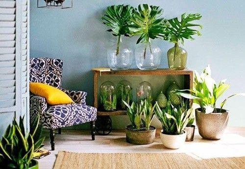 ¡Mi casa, mi selva! 20 ideas para decorar con plantas de interior 20