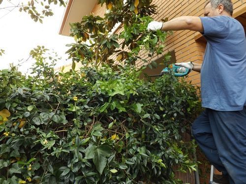 Herramientas de jardinería para podar fácilmente setos y trepadoras 3