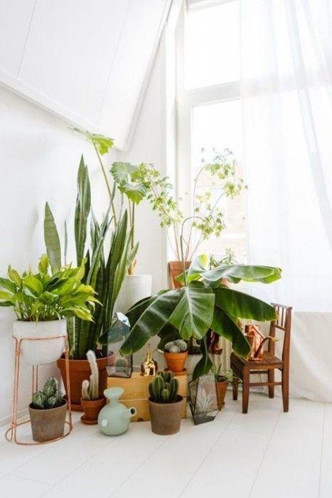Los 25 rincones con plantas de interior m s bellos de - Indoor plants decoration ideas ...