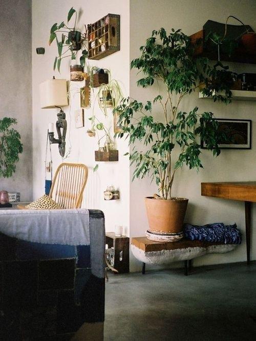 Los 25 rincones con plantas de interior más bellos de Pinterest 20