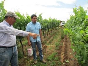 Gobierno se mantiene alerta por contaminación de viñas el Maule