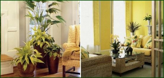 Resultado de imagem para plantas no interior de casas