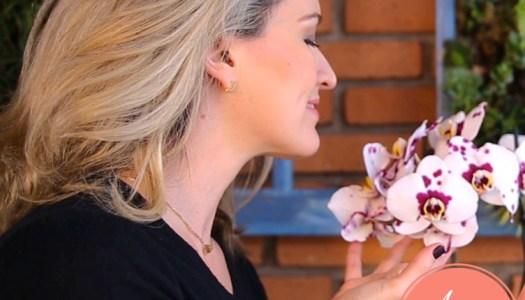 orquídeas: como cuidar  #aDicadoDia