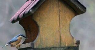 Trucos para atraer pájaros a nuestro jardín