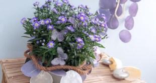 5 plantas que limpian el aire de tu casa