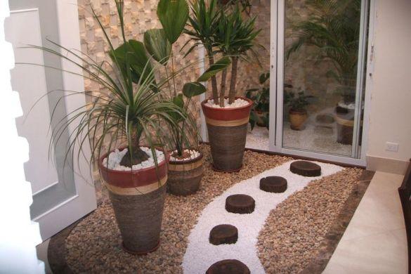 plantas para jardim de inverno chamaedorea