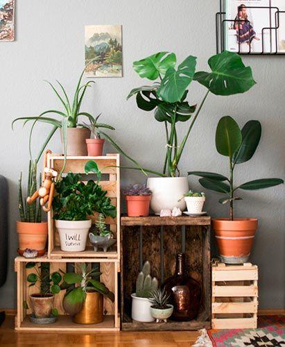 10 ideas originales para decorar con plantas: Small&LowCost