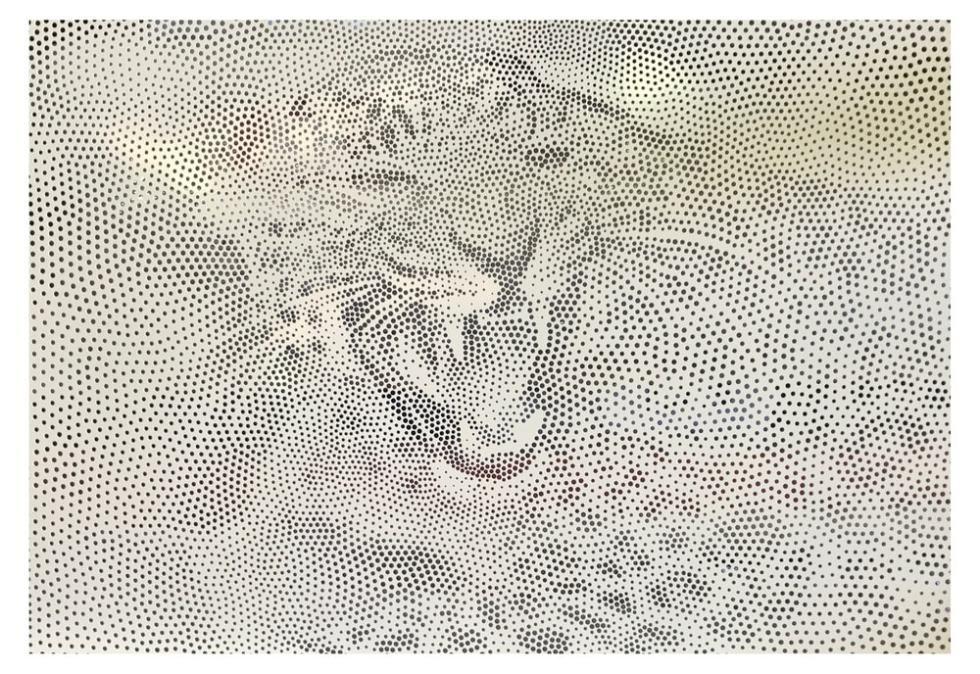 DSD Image Perf Screens Leopard
