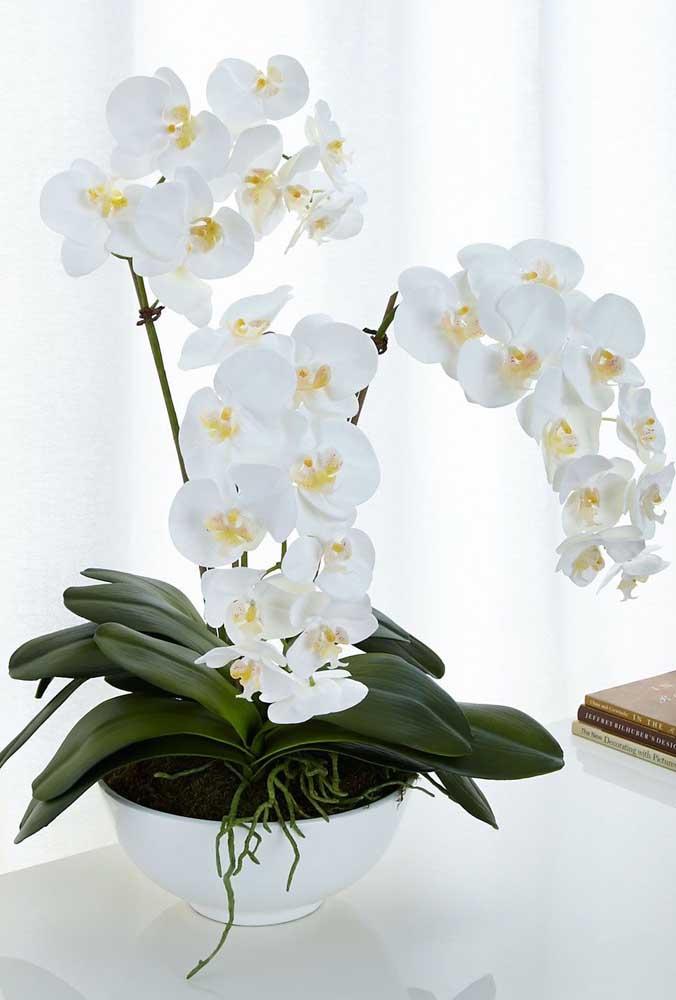 Orquídea Phalaenopsis Branca: o gênero de orquídeas Phalaenopsis é um dos mais comuns e populares no Brasil, as cores delas variam entre o branco, amarelo e vermelho