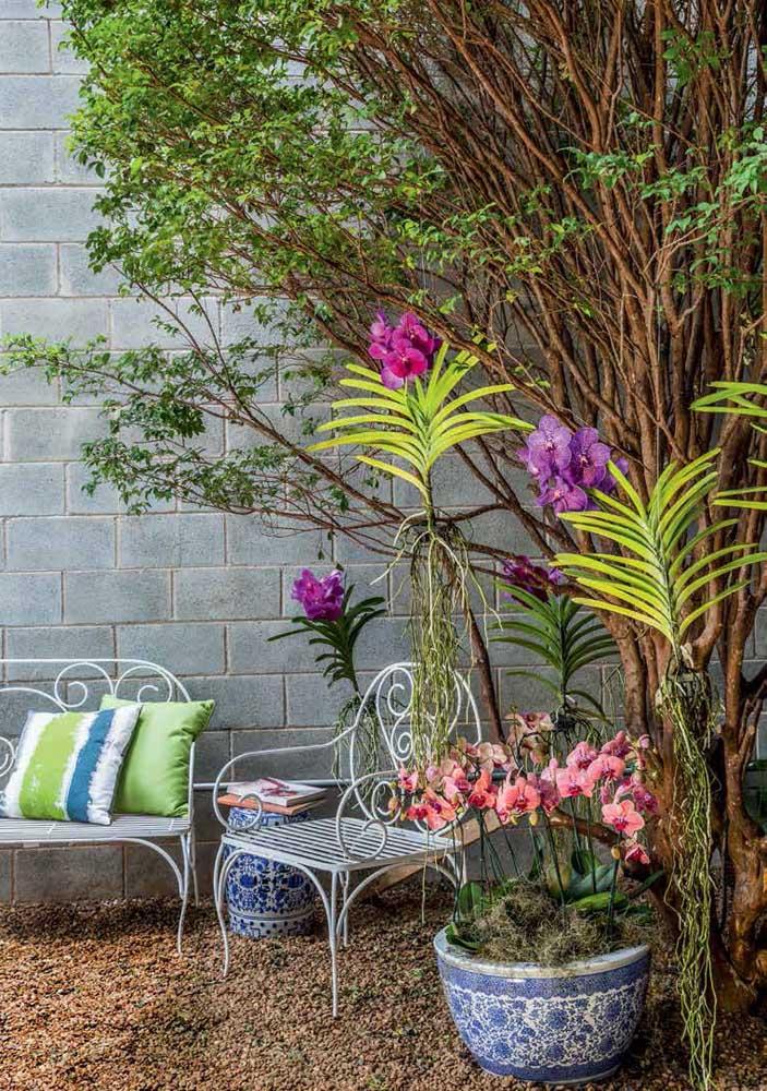 Existe uma variedade enorme de orquídeas terrestres em todo o mundo, mas os cuidados de cultivo são, de modo geral, os mesmos