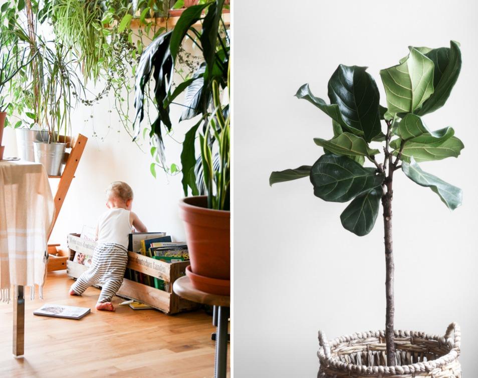 roślinne-dekoracje-wnętrz-pomysły