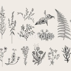 Zioła i dzikie kwiaty