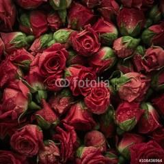 duze-kwiaty