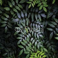 kolor-butelkowa-zielen-fototapeta