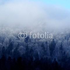 krajobraz-szron-na-drzewach-zimą