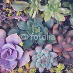kolorowe-sukulenty-tapeta