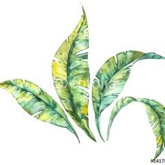 Akwarelowa ilustracja - tropikalne liście na białym tle