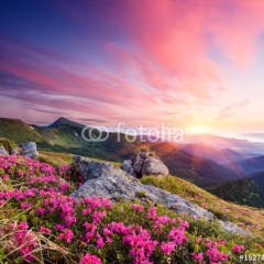 krajobraz-górski-kwiaty-o-świcie-fototapeta