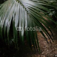 Dżungla Ishigakijima