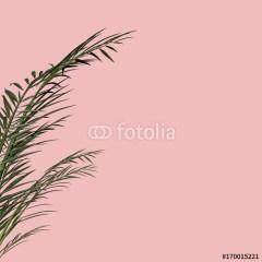 liście-palmy-rożowe-tło