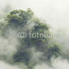 las-w-japonii-fototapeta
