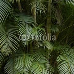 rozłożyste-tropikalne-liście-fototapeta-z-roślinami