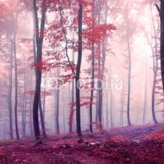jesienny-las-o-świcie