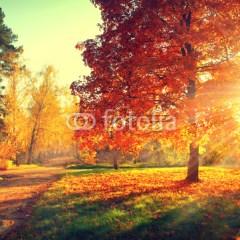 Jesienny pejzaż - rozświetlone drzewa w parku