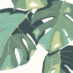 duże-liście-monstery-domowe-biuro