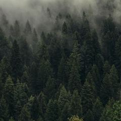 Widok lasu we mgle