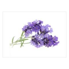 prowansalskie-kwiaty