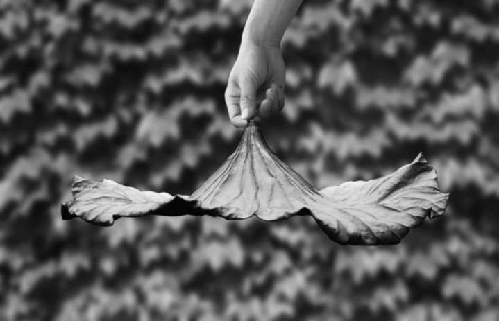 A lotus leaf - Le centre de table by Yung Ho Chang
