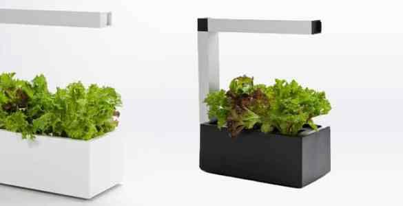 Herbie système culture indoor