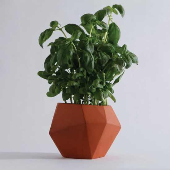 pots à herbes aromatiques Herb  Nick Fraser