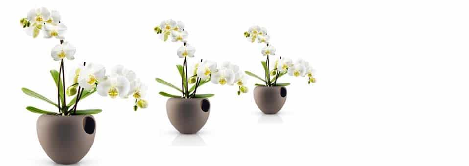 pot orchidée eva solo