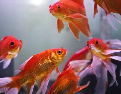 Comment un aquarium Feng Shui peut améliorer l'énergie de votre maison