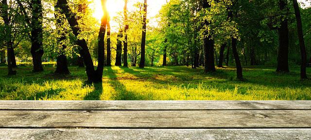 entretient terrasse bois